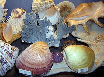 Museo delle conchiglie