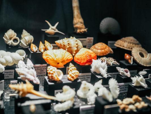 Fermeture exceptionnelle du musée des coquillages